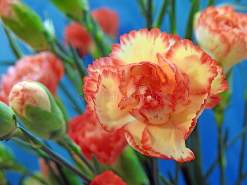 Fiorista floreale del mazzo del fiore dei garofani floristry fotografia stock libera da diritti