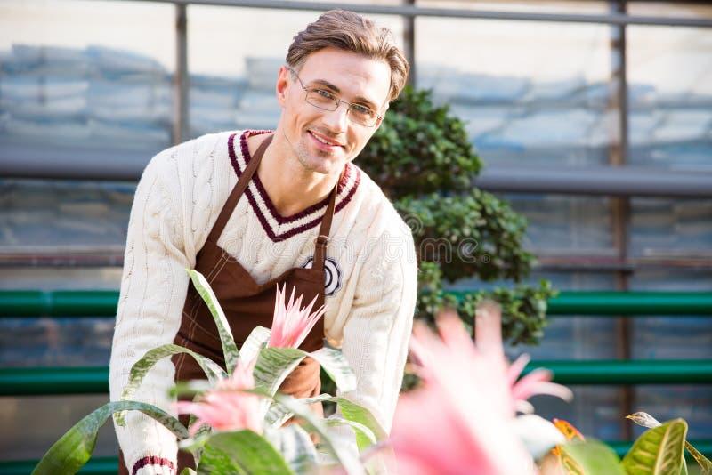 Fiorista maschio felice che lavora con i bei fiori rosa fotografia stock