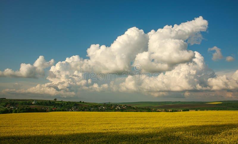 Fioritura agricola culture dei campi verdi e gialle su cielo blu e sulle nuvole fotografia stock libera da diritti