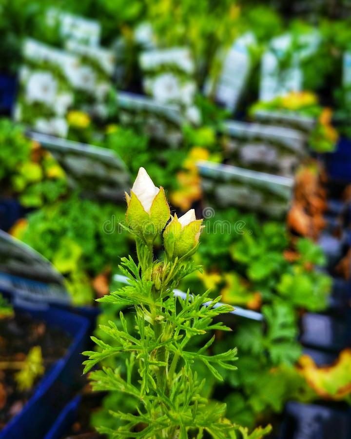 Fioritura dei fiori immagini stock