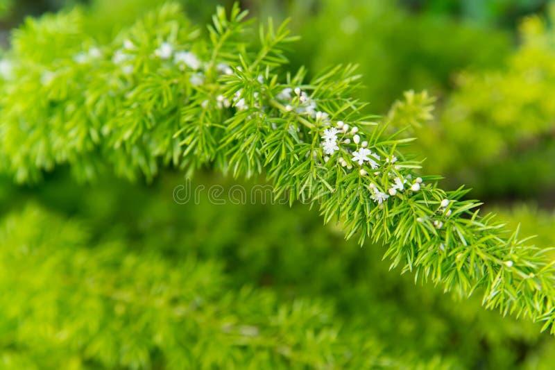 Fioritura dei fiori con le foglie verdi su sfondo naturale Ramifichi con il fiore bianco, molla Fiore, fioritura, fiorente Primav fotografie stock libere da diritti