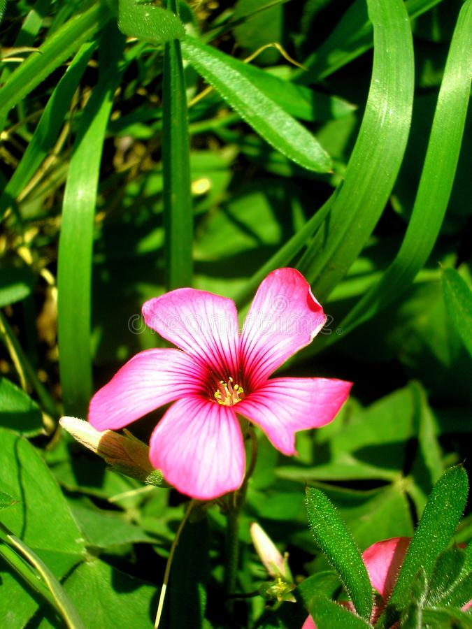 Fioritura del fiore immagini stock
