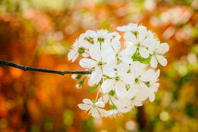 Fioritura del fiore immagine stock