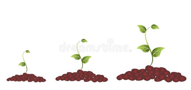 Fioritura della pianta verde royalty illustrazione gratis
