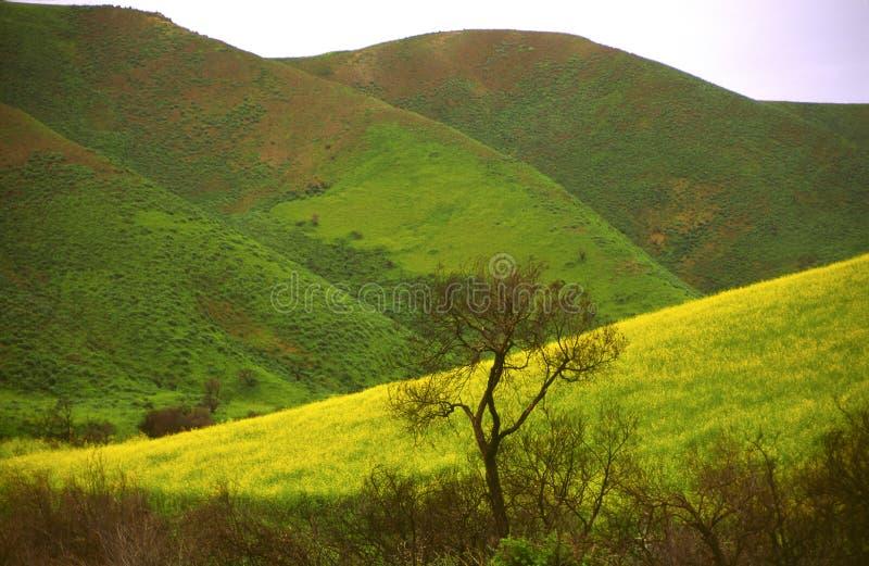 Fioritura della sorgente in colline litoranee della California fotografie stock
