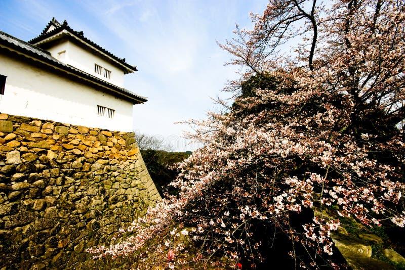 Fioritura di Sakura a Hikone-jÅ (castello) immagine stock libera da diritti