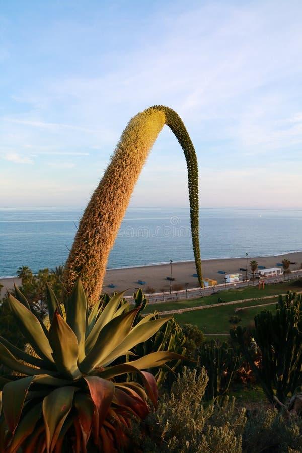 Fioritura di un cactus fotografie stock