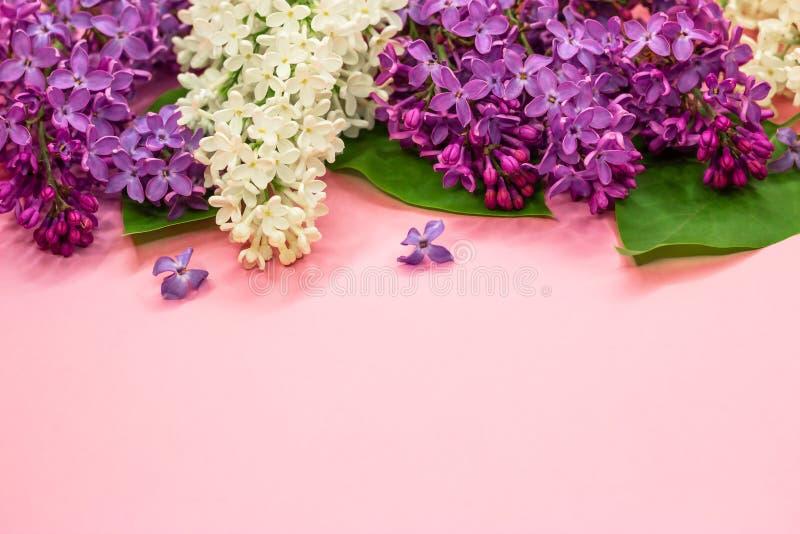 Fioritura fiori lilla porpora e bianchi su fondo rosa pastello dalla cima Copi lo spazio Fondo di nozze di estate fotografia stock libera da diritti