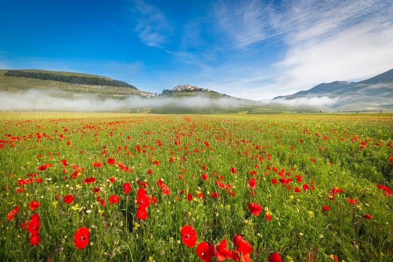 Fioritura no piano grandioso na névoa da manhã, Úmbria, Itália foto de stock