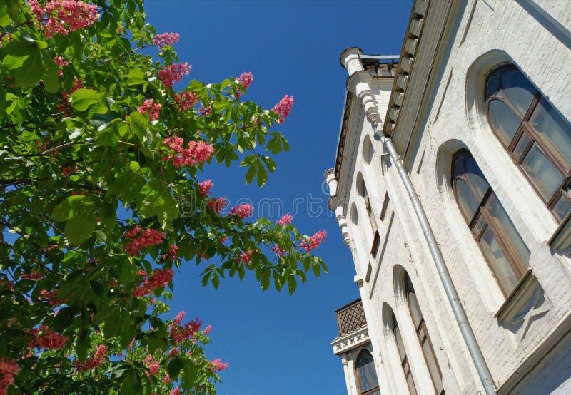 Fioritura rosa delle castagne vicino alla bella vecchia casa immagini stock libere da diritti