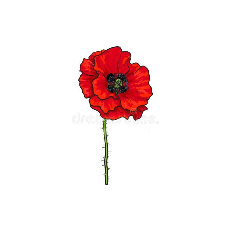 Fioritura rossa del fiore del fiore del papavero di vettore illustrazione vettoriale