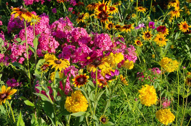 Fioritura variopinta dei fiori nel giardino fotografie stock libere da diritti
