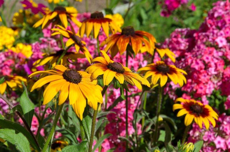 Fioritura variopinta dei fiori nel giardino di estate immagine stock libera da diritti