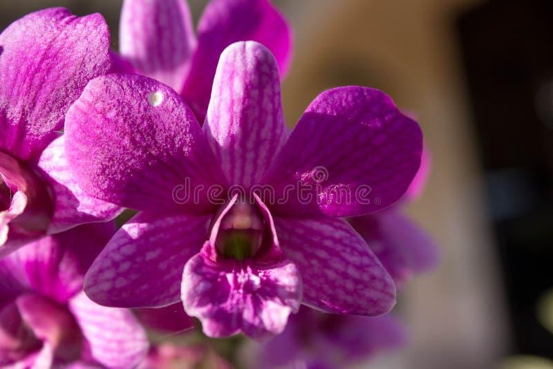 Fiower-Orchideen cllor Hinterhof natürlich stockfotografie