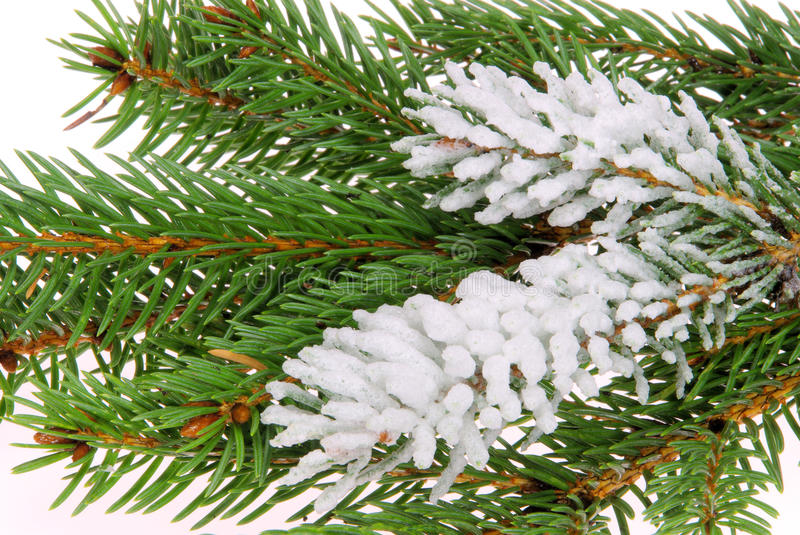 Download Fir branch stock image. Image of traditional, decorative - 12385101