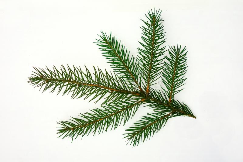 Fir branch closeup isolated on a white background. Christmas tree element of decoration for design of New Year season stock photos