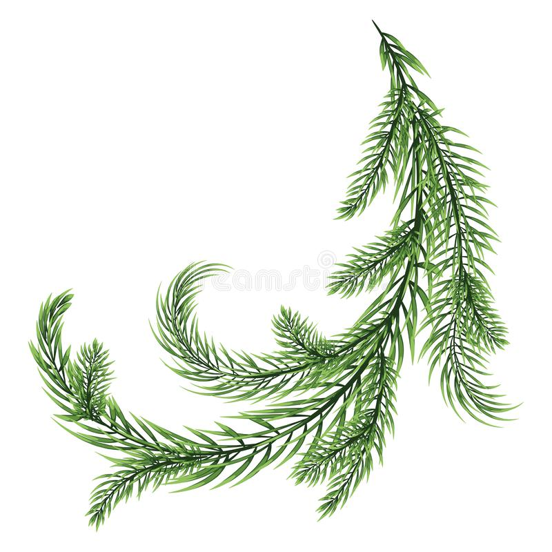 Free Fir Branch Isolated On White Background Stock Images - 131243304