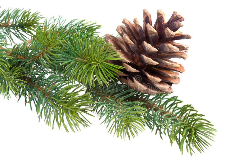 Download Fir branch with pine cone stock image. Image of frame - 21706615