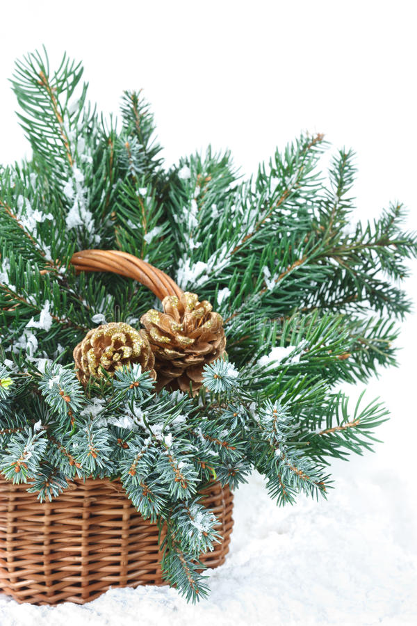 Download Fir Branches. Stock Images - Image: 21105324