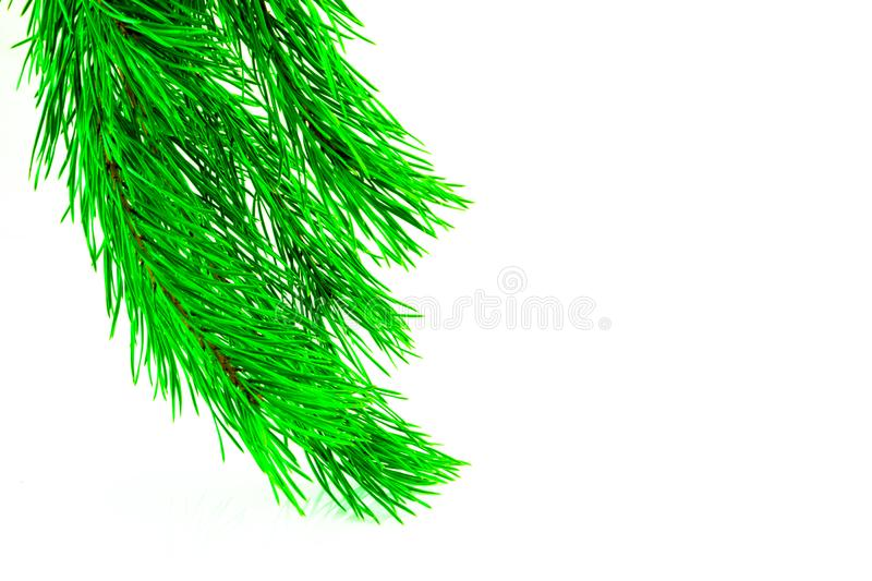 Fir branches border on white background, good for christmas backdrop.  royalty free stock images
