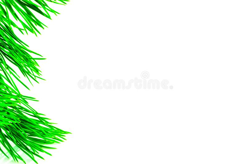Fir branches border on white background, good for christmas backdrop.  stock image