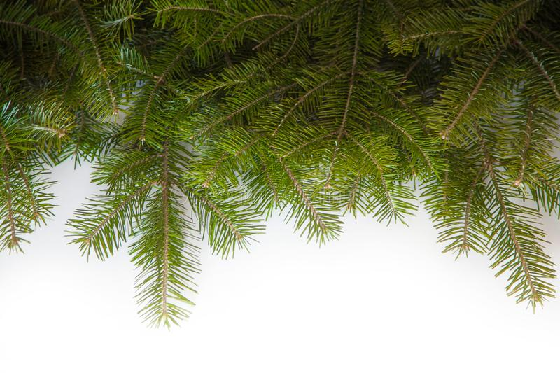 Wide Christmas border arranged with fresh fir branches isolated on white shaped as an arch stock photo