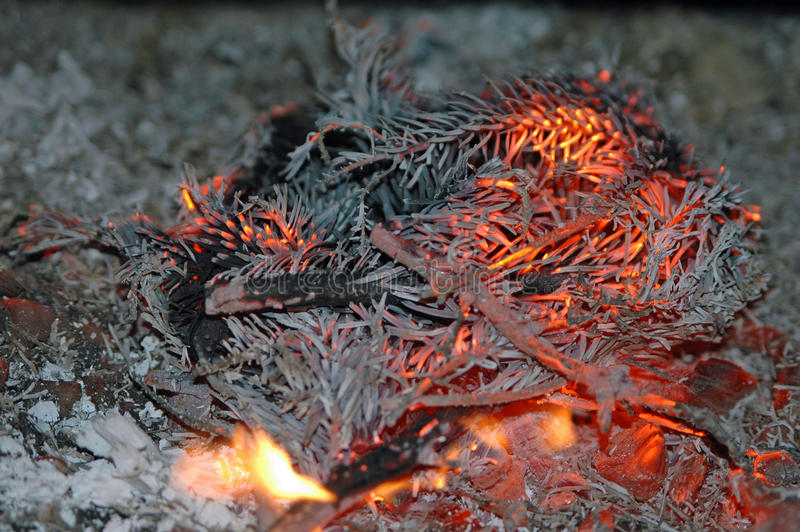 Fir branches burning. At a fireplace royalty free stock images