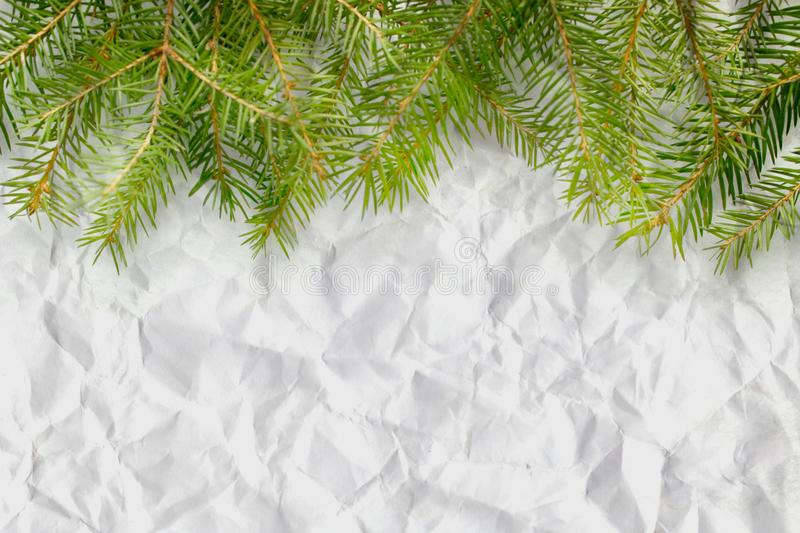 Fir branches on white background, crumpled paper texture royalty free stock photos