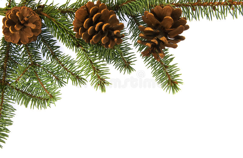 Download Fir brunch with cones stock photo. Image of natural, frame - 12028308