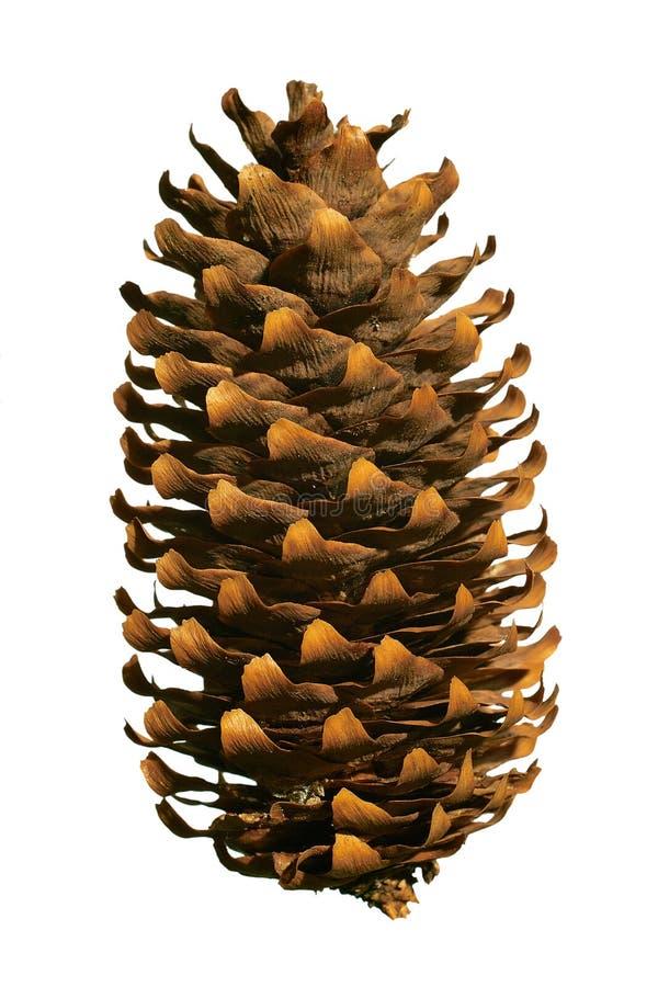 Free Fir Cone Stock Photo - 3617950