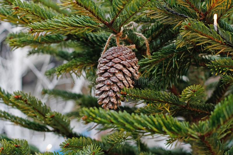 Fir cone hanging using rope on the branch stock images