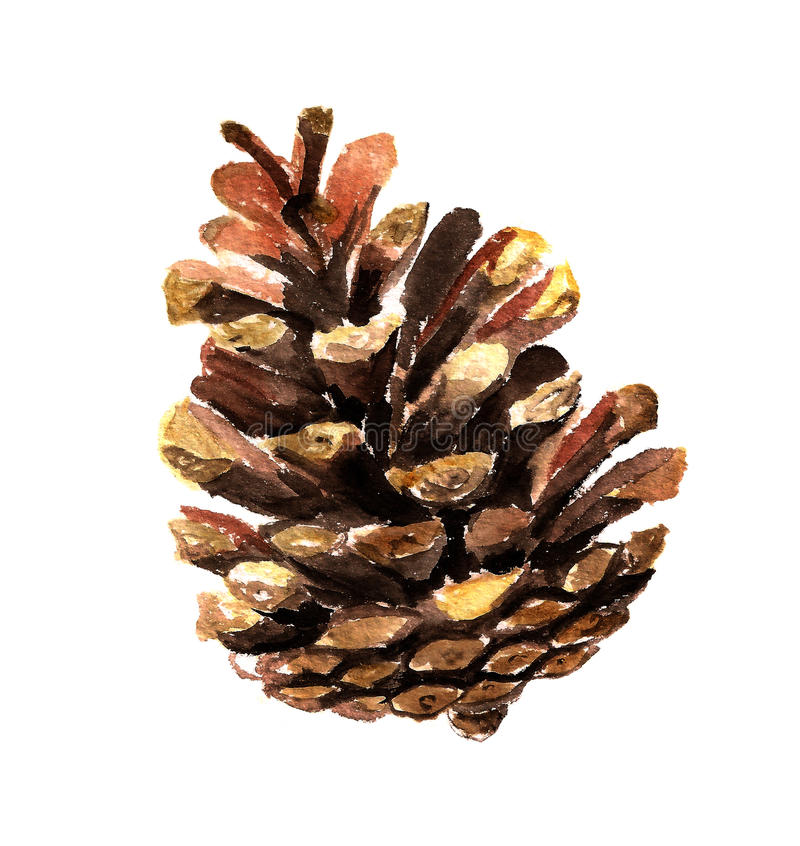 Fir cone watercolor stock photo image 31656990 - Pliage serviette pomme de pin ...