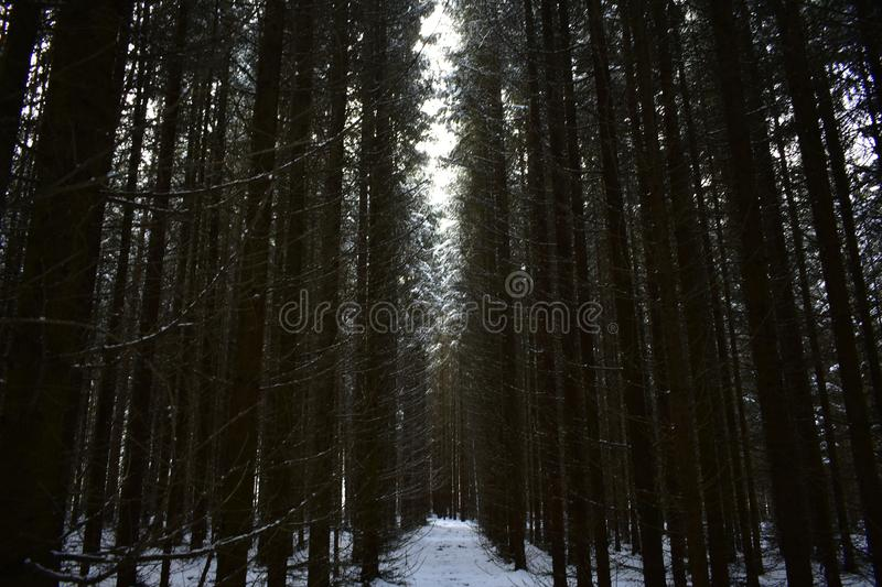 In the fir forest the road is twilight. The crown branches of the trees were covered with snow, fir feet high crashing over royalty free stock photography