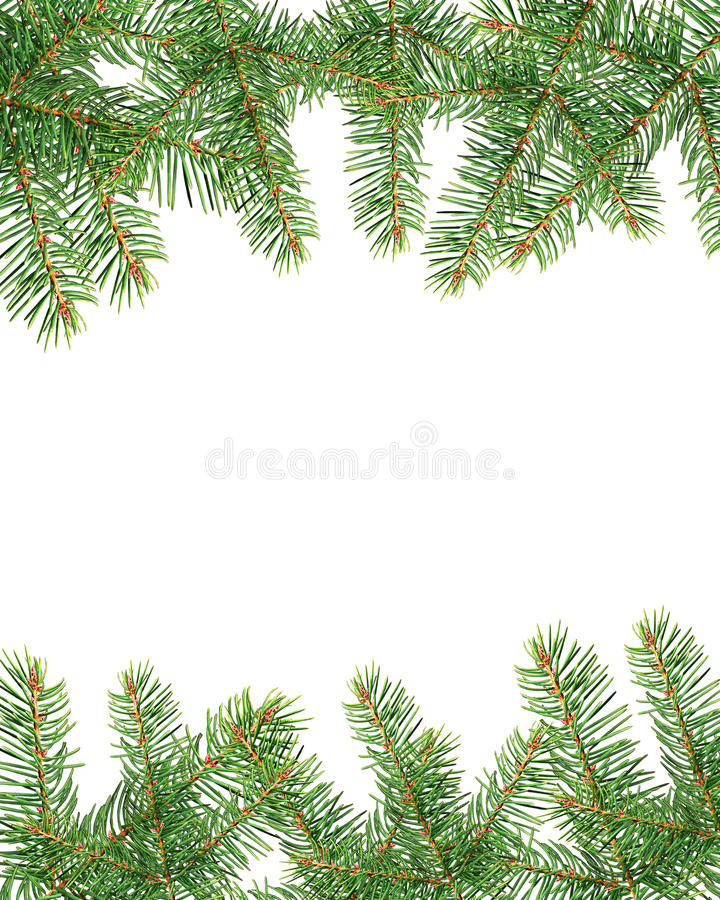 Download Fir frame stock photo. Image of green, frame, ornament - 22224646
