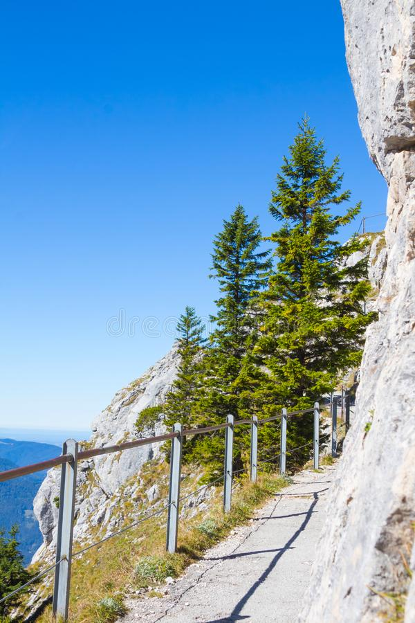 Fir green trees against a blue sky background, vertical. Narrow mountain path or trail in summer. Fir green trees on a cliff.  stock photo