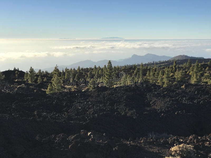 Fir landscape at Teide National Park. In Tenerife the Canary Islands royalty free stock photos