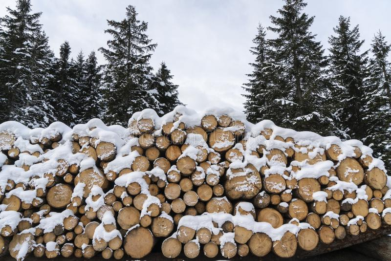 Fir logs cut and stacked. On the edge of a forest in winter in the Trentino Alto Adige region, Italy royalty free stock photos