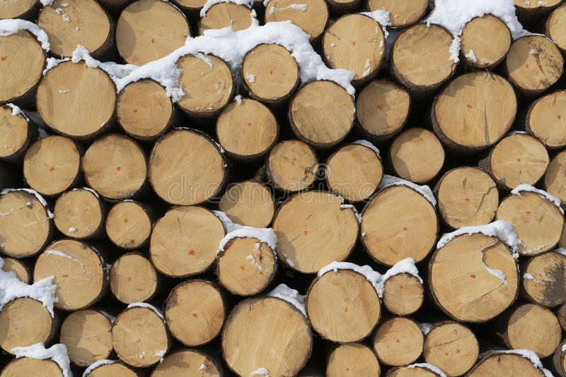 Fir logs cut and stacked. On the edge of a forest in winter in the Trentino Alto Adige region, Italy stock photos