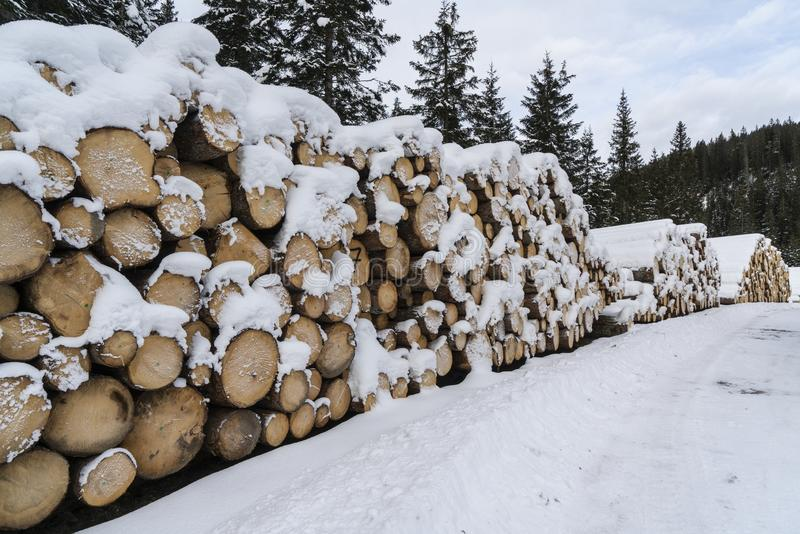 Fir logs cut and stacked. On the edge of a forest in winter in the Trentino Alto Adige region, Italy stock image