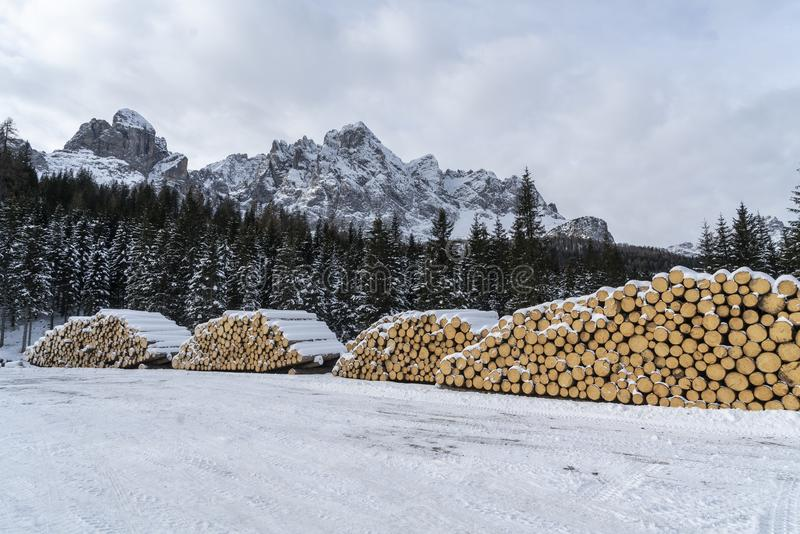 Fir logs cut and stacked. On the edge of a forest in winter in the Trentino Alto Adige region, Italy royalty free stock image