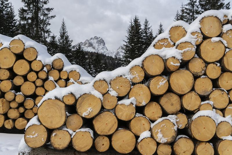 Fir logs cut and stacked. On the edge of a forest in winter in the Trentino Alto Adige region, Italy royalty free stock photo