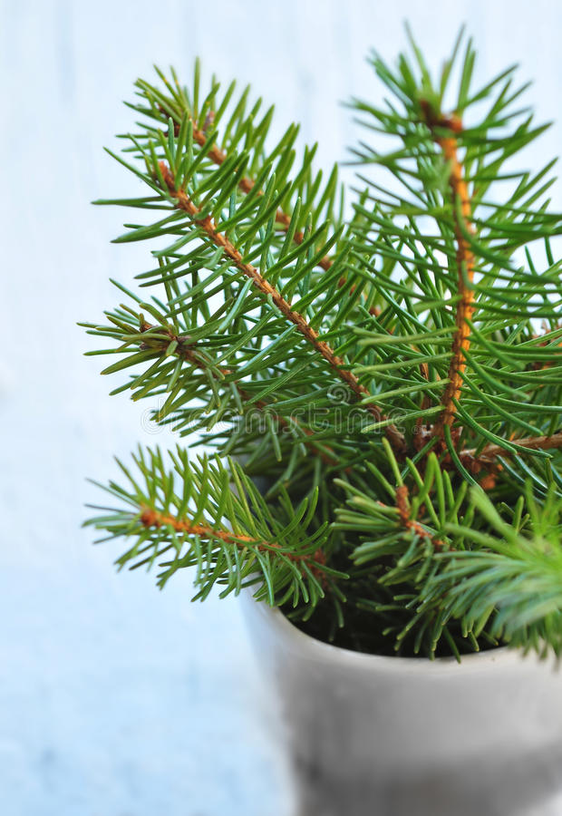 Download Fir in the pot stock photo. Image of needles, tree, christmas - 27520600