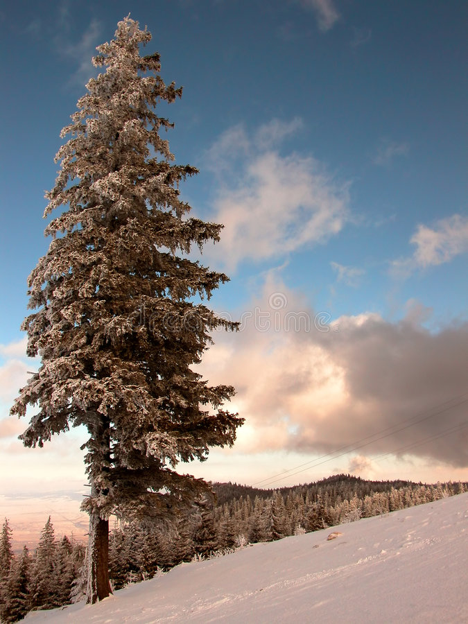 Download Fir tree stock photo. Image of mountains, slopes, winter - 107192