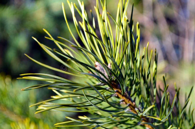 Fir-tree στοκ φωτογραφία με δικαίωμα ελεύθερης χρήσης