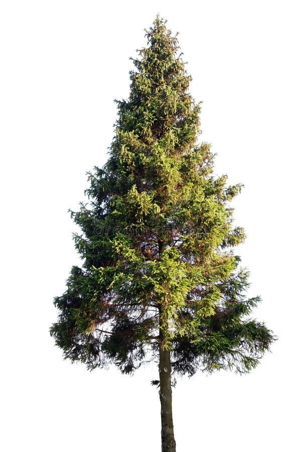 Free Fir Tree Stock Photos - 58665473