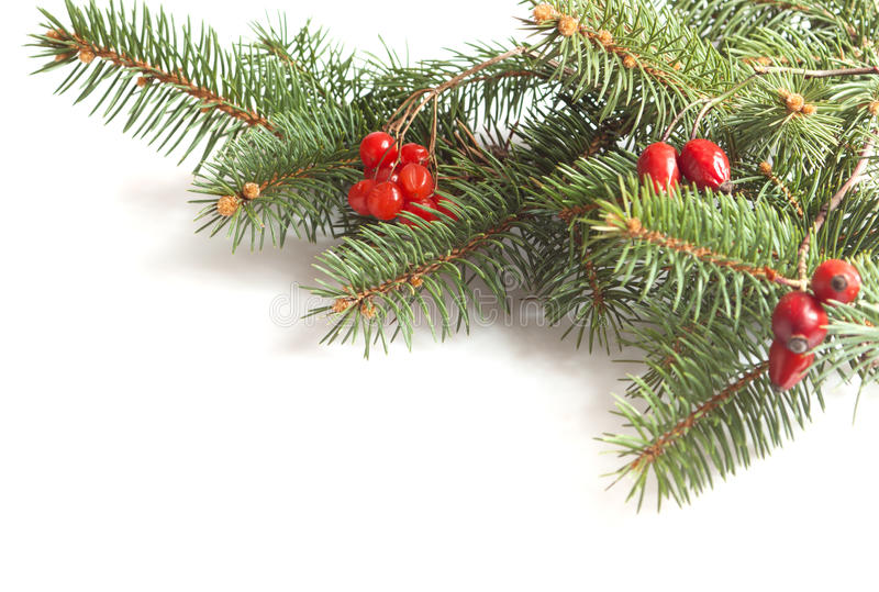 Fir-tree branch stock image