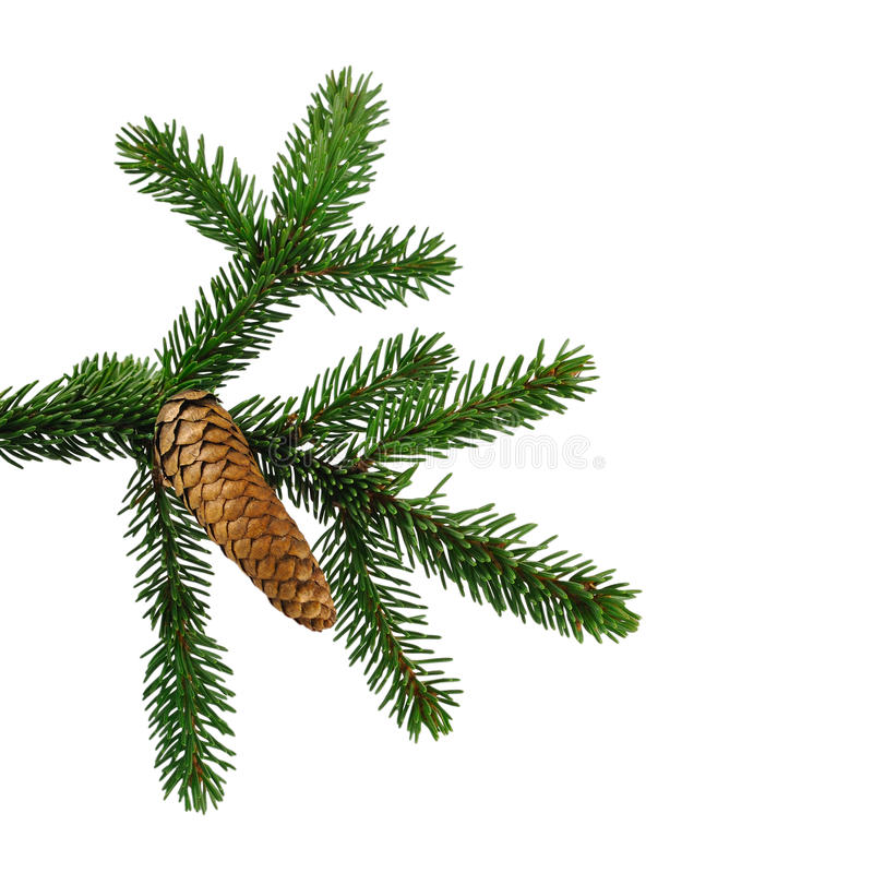 Big W White Christmas Tree: Fir Branch Stock Image. Image Of Part, Image, Leaf
