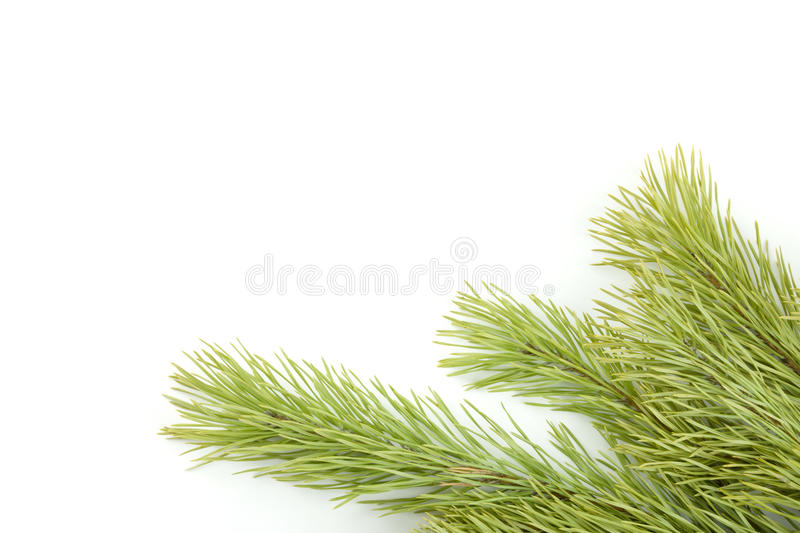 Download Fir tree branch stock photo. Image of green, detail, conifer - 26789192