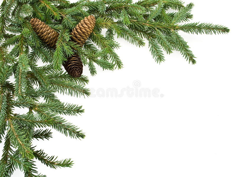 Download Fir tree branch with cones stock image. Image of christmas - 6772203