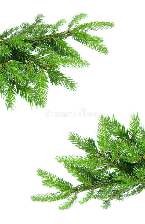 Free Fir Tree Branch Frame Stock Image - 20460901